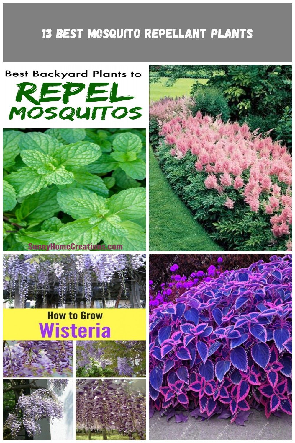 Plant these herbs, flowers and other plants to repel mosquitos.  These are all great plants to add to your landscape - your front, side or back yard.  #mosquitos #plants #flowers #garden #gardening flowers garden Best Backyard Plant to Repel Mosquitos #mosquitoplants