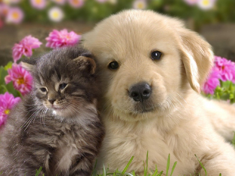 4 Valentine S Day Puppy Love Golden Retriever Dog Kitten Cat Heart Love Candy Greeting Notecards Envelopes Set 6 99 Via Schattige Dieren Dieren Baby Dieren