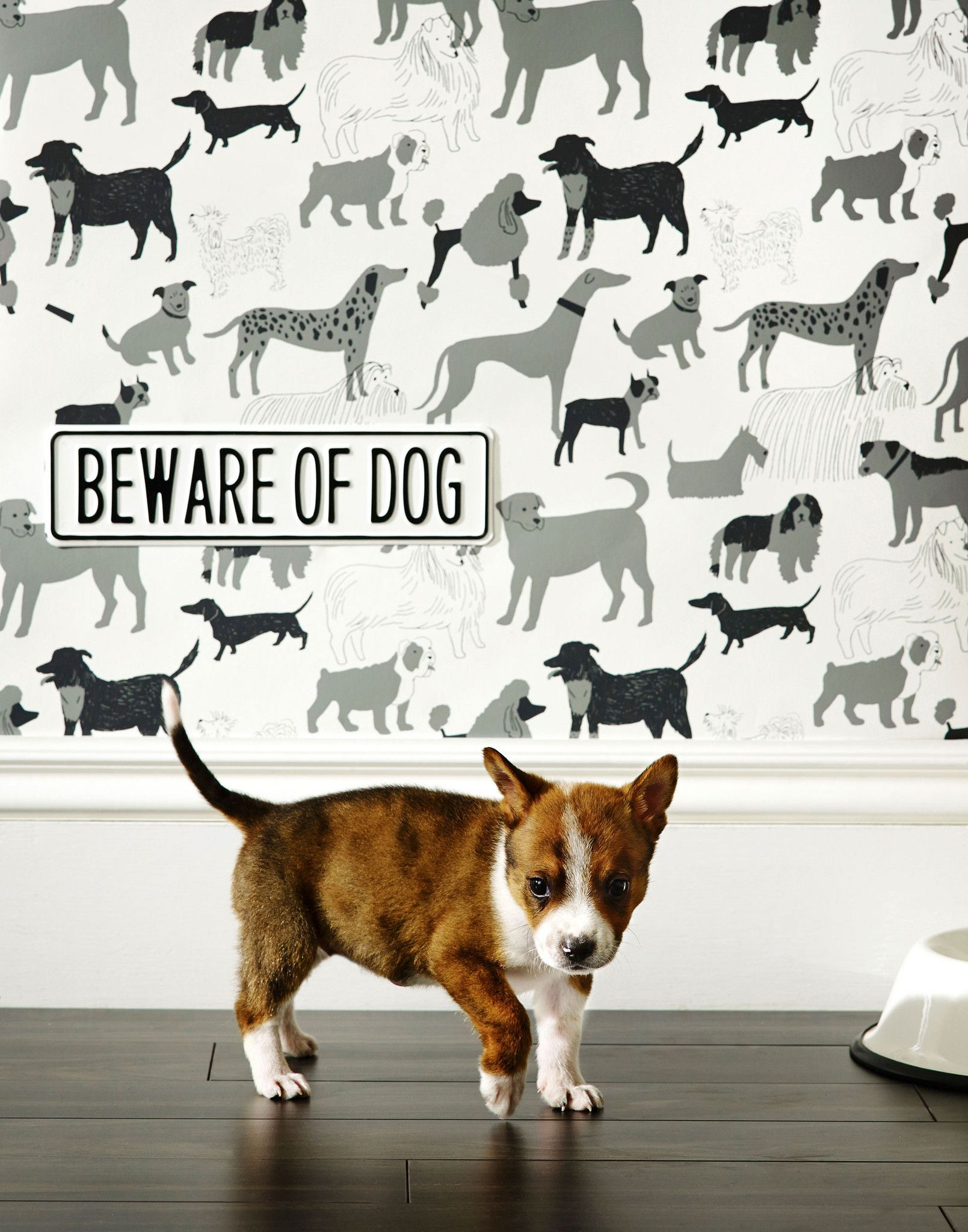 Dog Park Wallpaper by Julia Rothman ~ Clever dog themed wallpaper is screen printed by hand | Hygge & West