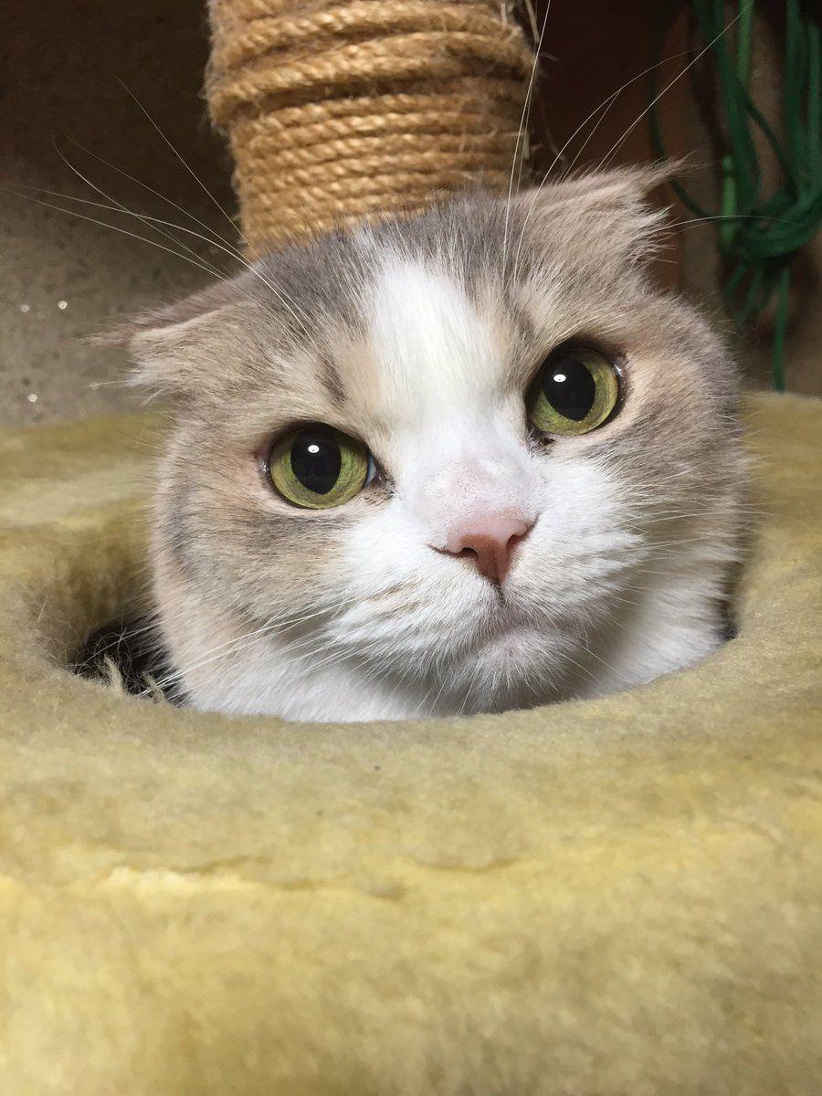 Twitter 子猫 ワンコ ペット