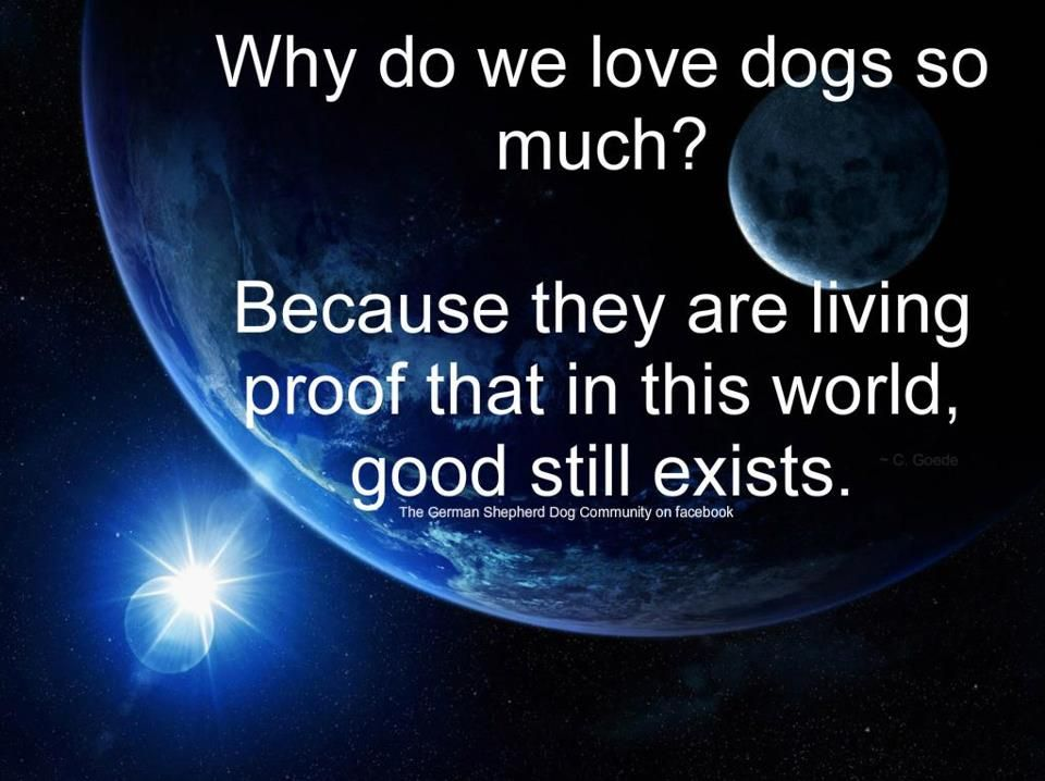 Dogs are good
