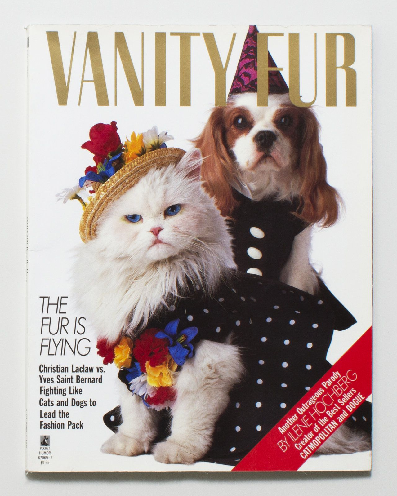 Vanity Fur With Images Furry Friend Cute Animal Pictures Cats