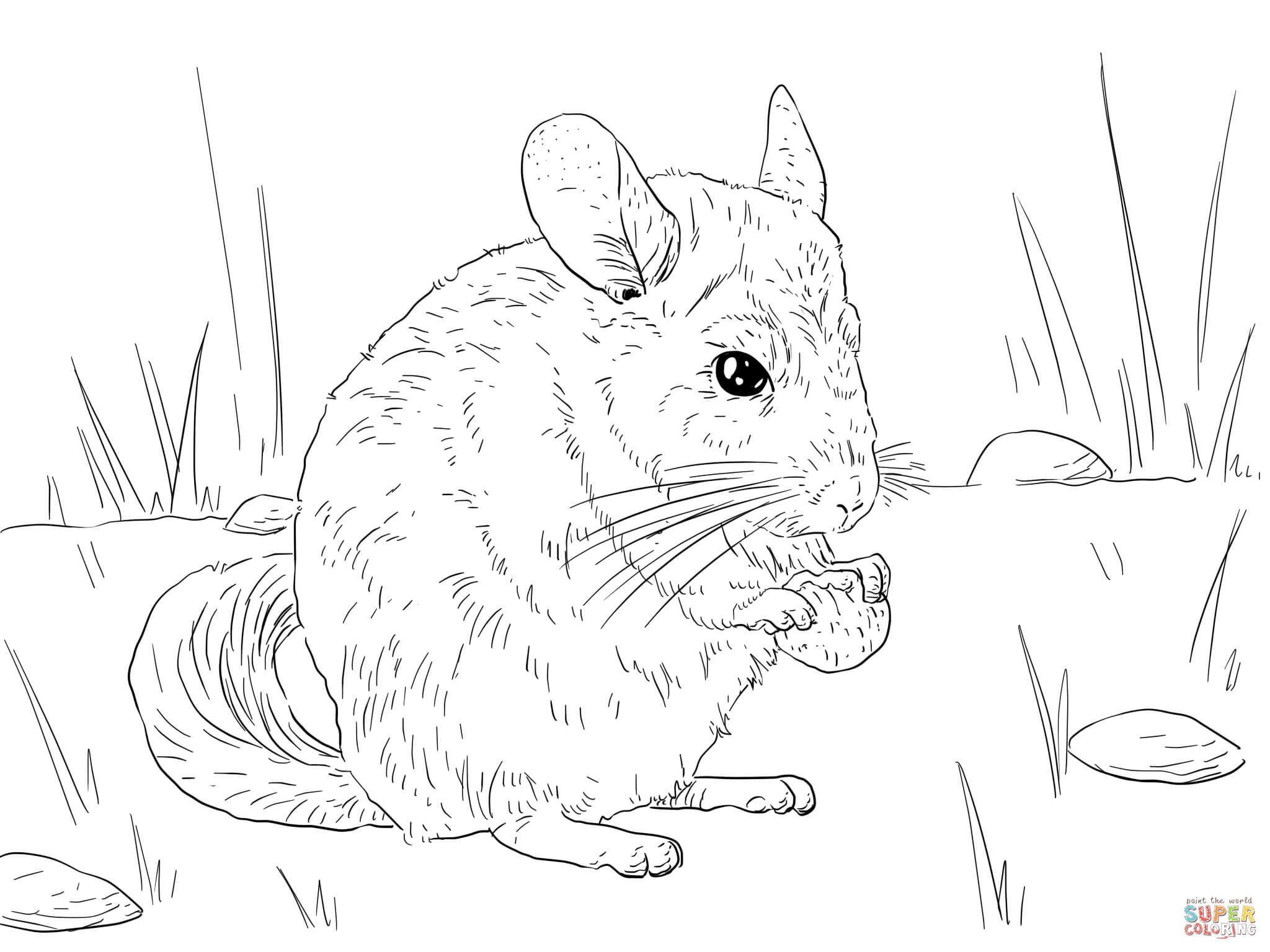 Long Tailed Chinchilla Coloring Page Free Printable Coloring Pages Animal Coloring Pages Coloring Pages Chinchilla [ 1536 x 2048 Pixel ]