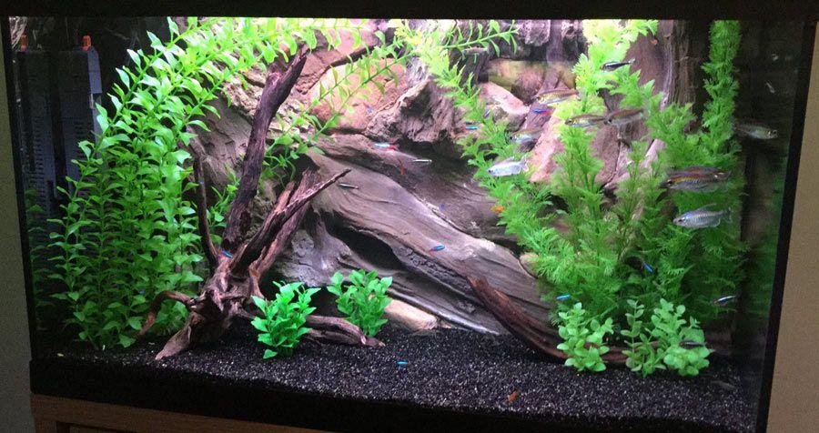 Small Fish Tank Decoration Idea With 3d Background Design Amazon