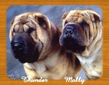 Big Horn Shadow Ranch Chinese Shar Pei Breeders Located In