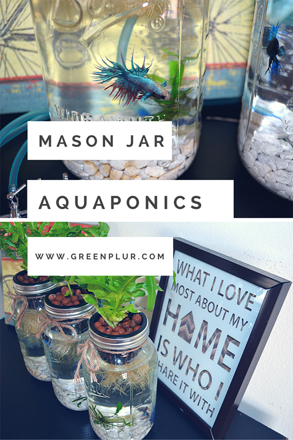 3 mason jar aquaponics kit build your own hydroponics for Fish tank herb garden