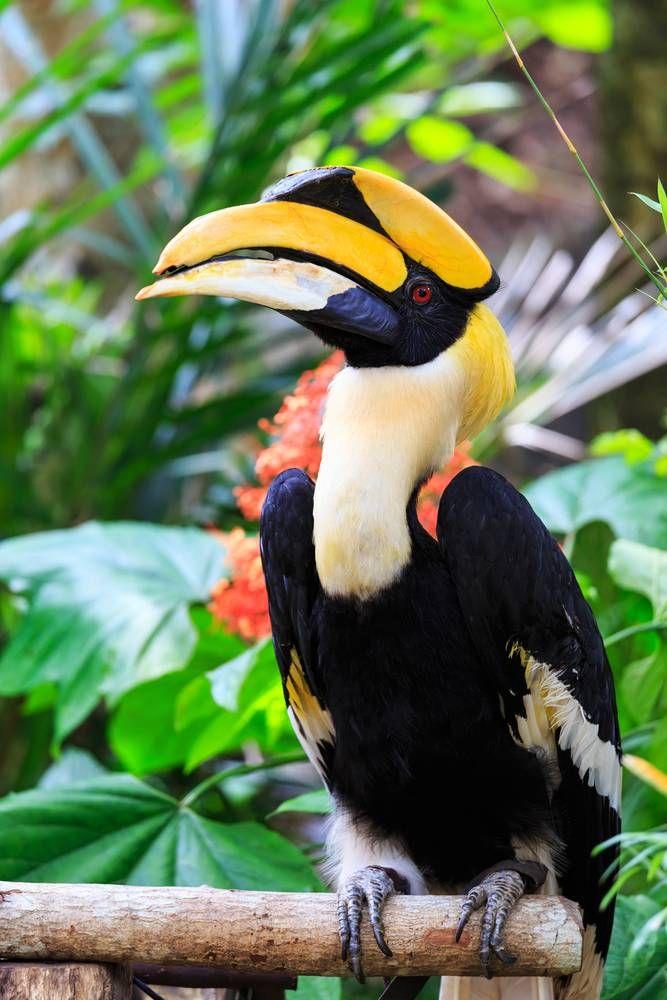 Pin On Birds Bucerotiformes Hornbills Hoopoes Wood Hoopoes