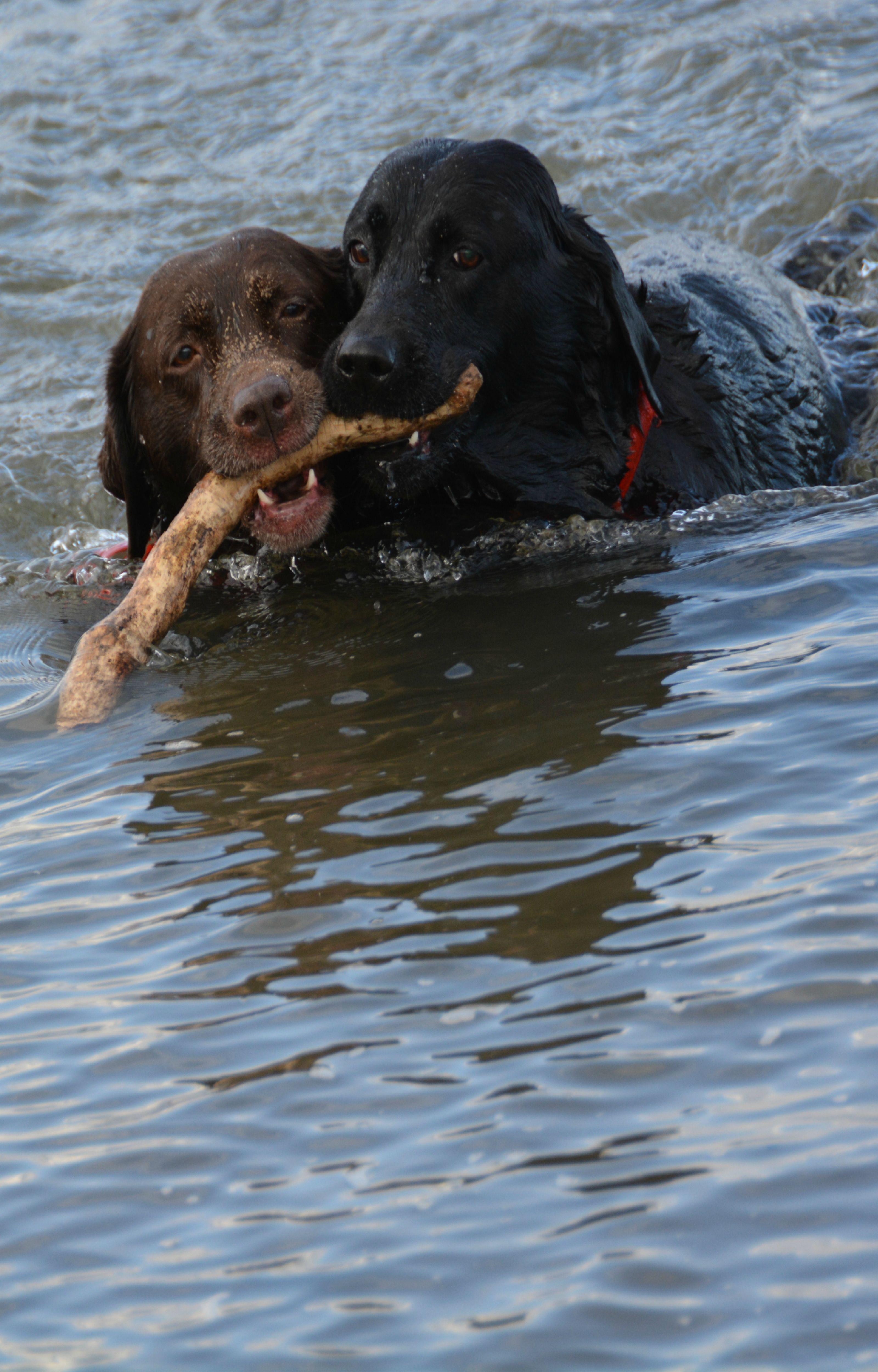 Izzy and bree at the beach Cramond Edinburgh by Wil
