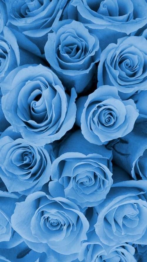 Phone Backgrounds Blue Roses Wallpaper Blue Wallpaper Iphone Blue Aesthetic Pastel
