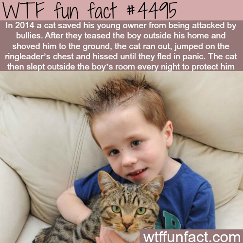 Cat saves his young owner from bullies - WTF fun facts