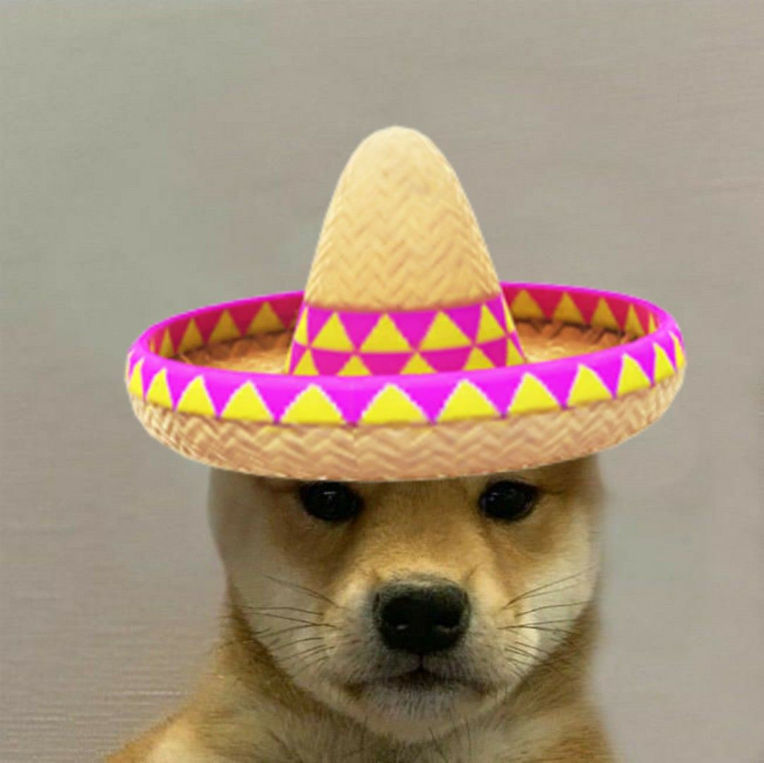 Perro Dog Dog Memes Animal Memes Dogs