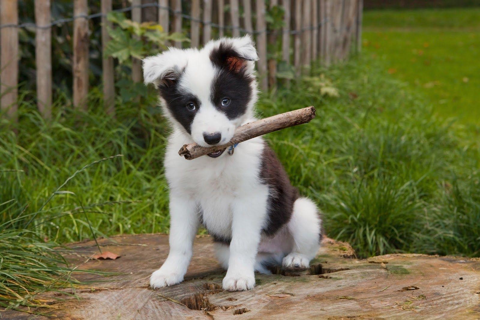 Mascotas Fotos De Animales Perritos Muy Lindos O Dogs Very Cute