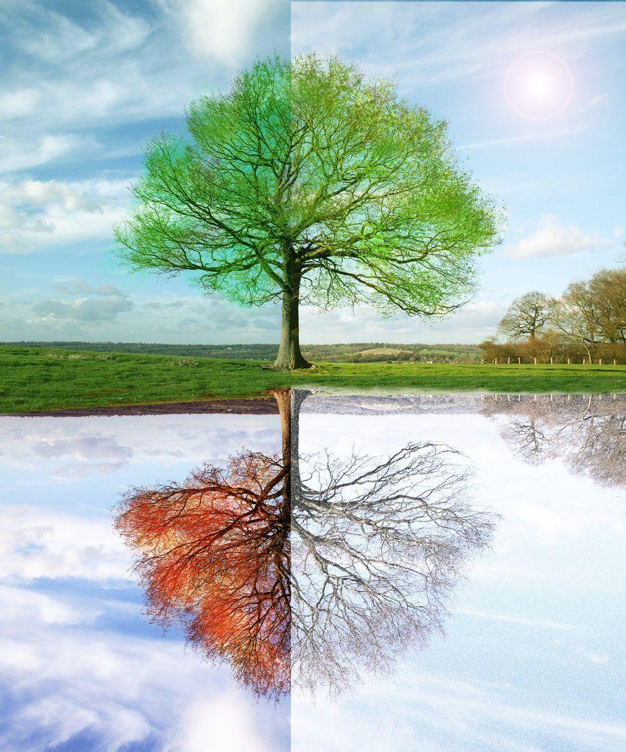 это дерево зимой летом на одной картинке позволяет закрепить точно