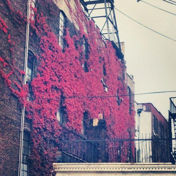 autumn wall in brooklyn; image via katiebreelah