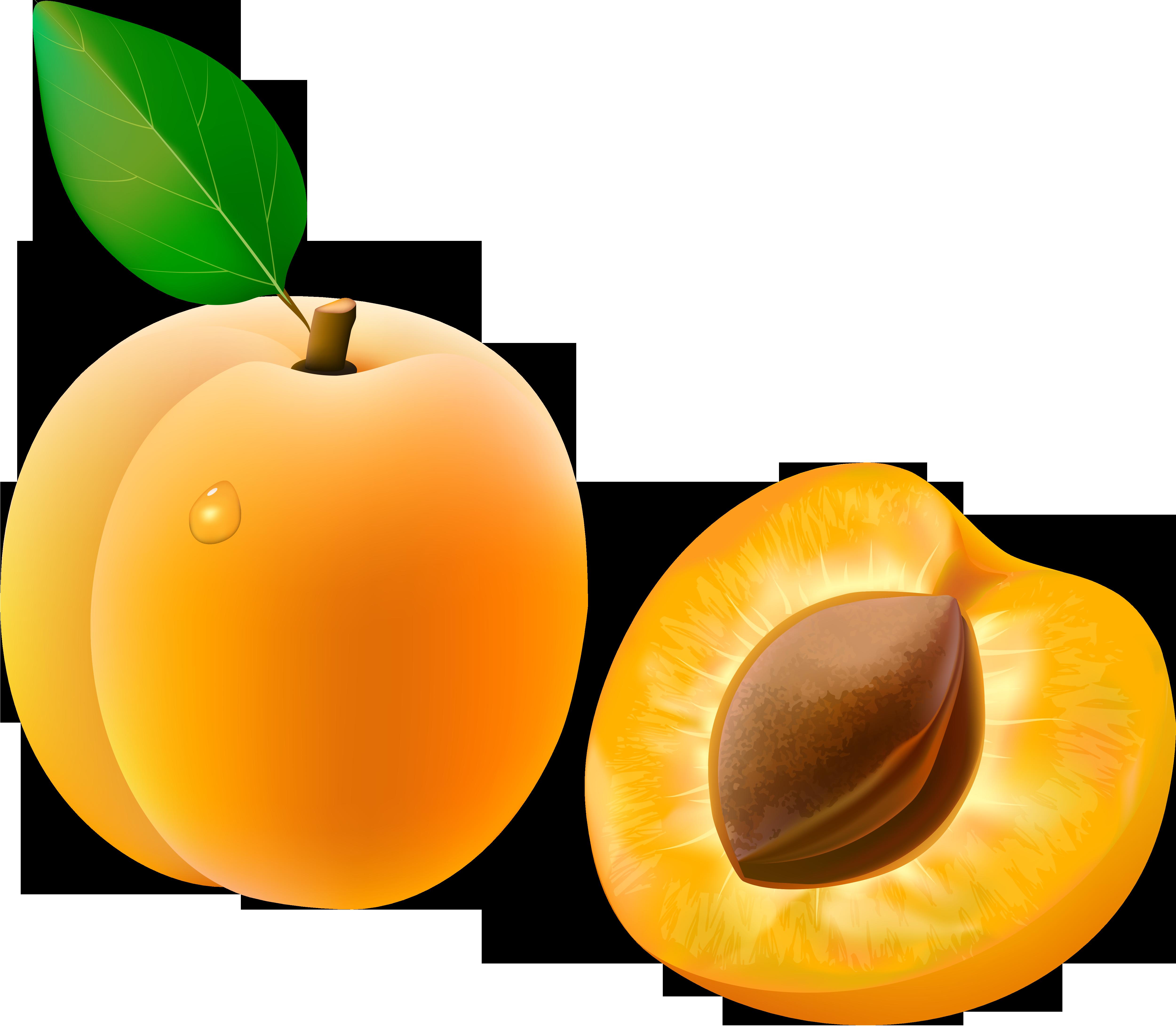 Веселый абрикос картинки