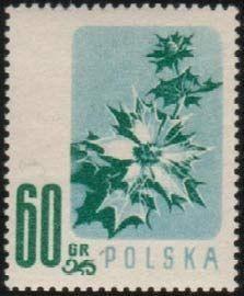 Znaczek Sea Holly Polska Kwiaty Pod Ochrona Mi Pl 1021 Sn Pl 783 Yt Pl 905 Pol Pl 878 Flower Stamp Sea Holly Stamp