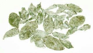Kandierte Pfefferminzblätter