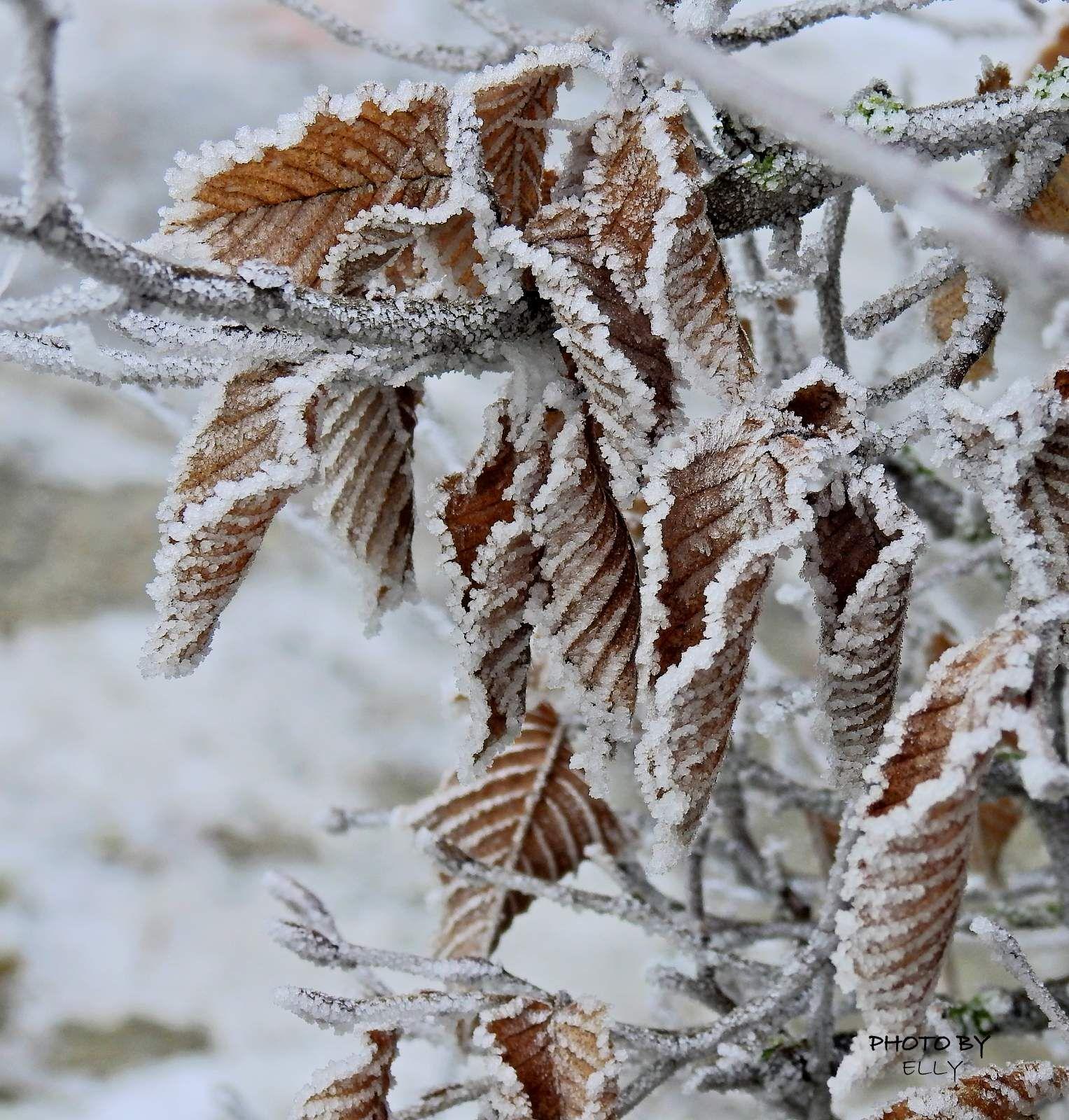 #mist #fogg #vorst #frost #winter #Julianpark #Bolsward #friesland