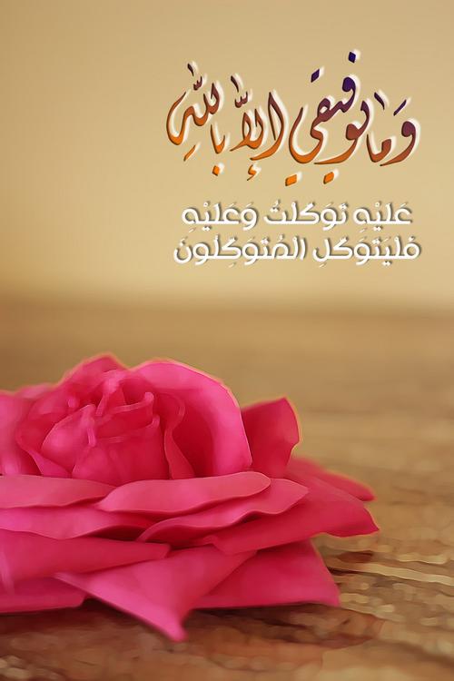 صور اسلامية ايات دينية صور قرانية Plants Rose Flowers