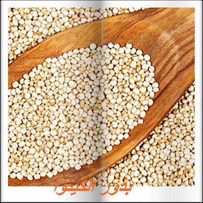 بذور الكينوا Food Bread