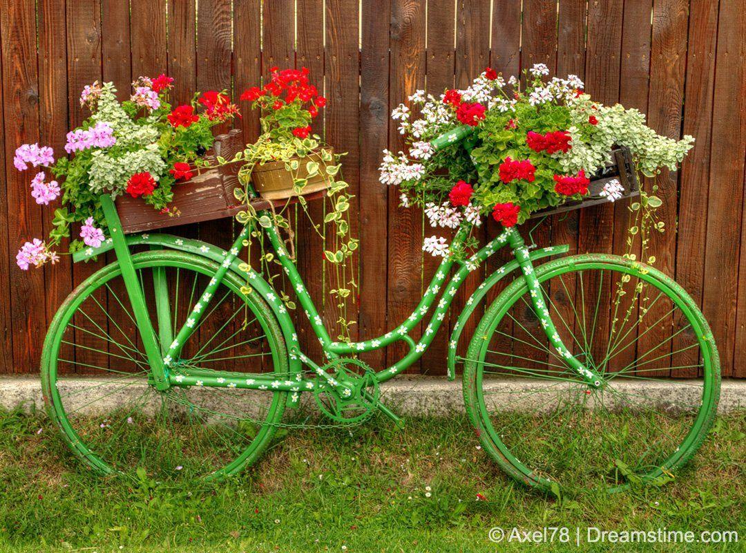 Dreamstime Dreamstime Twitter Bike Planter Bicycle Decor Bike Decorations