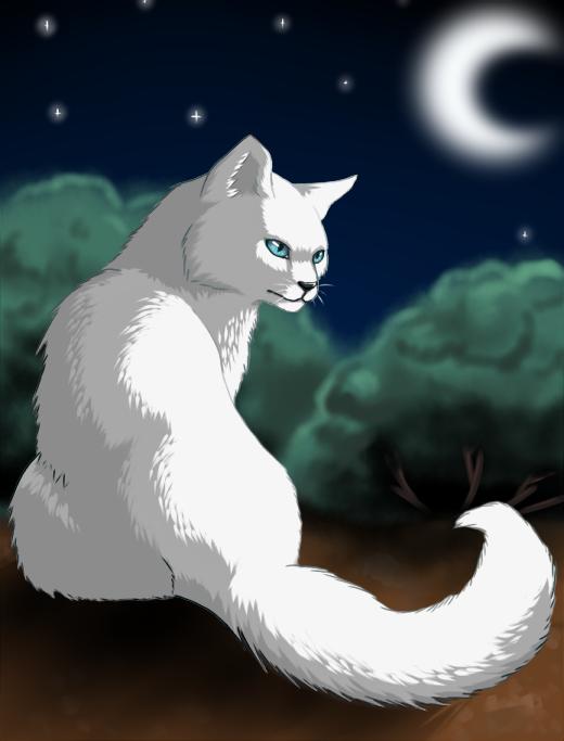 Výsledek obrázku pro warriors cats cloudtail