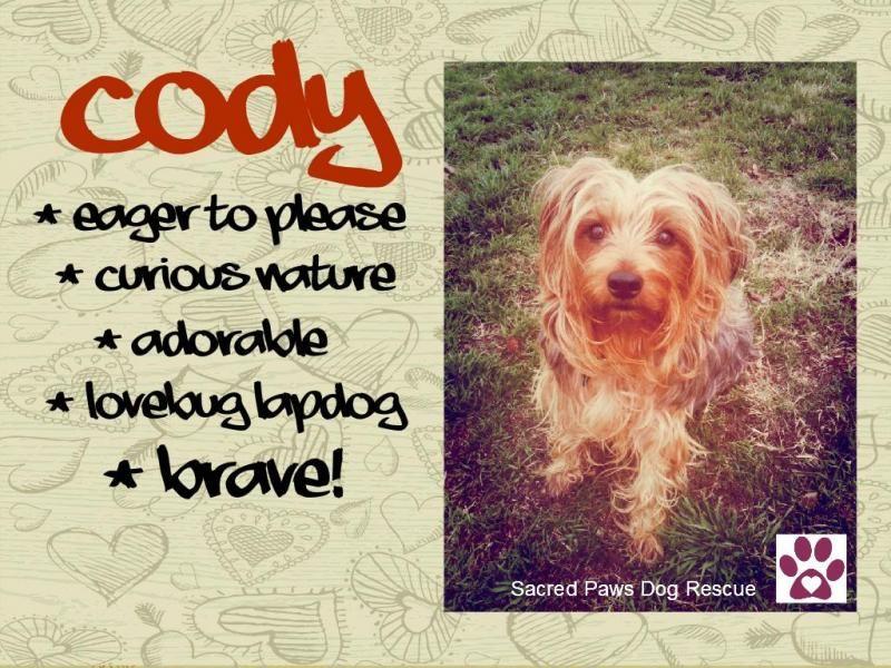 Adopt Cody On Petfinder Yorkshire Terrier Yorkie Yorkie Yorkshire Terrier