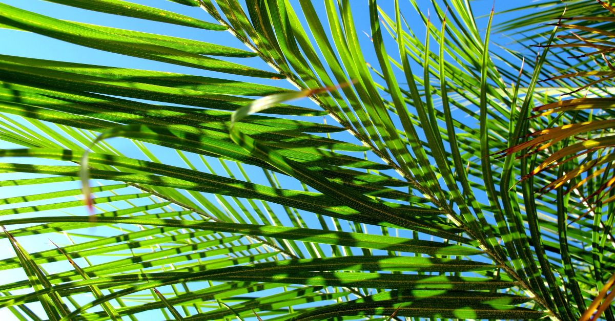 What Is Palm Sunday? Bible Story and Meaning Today in