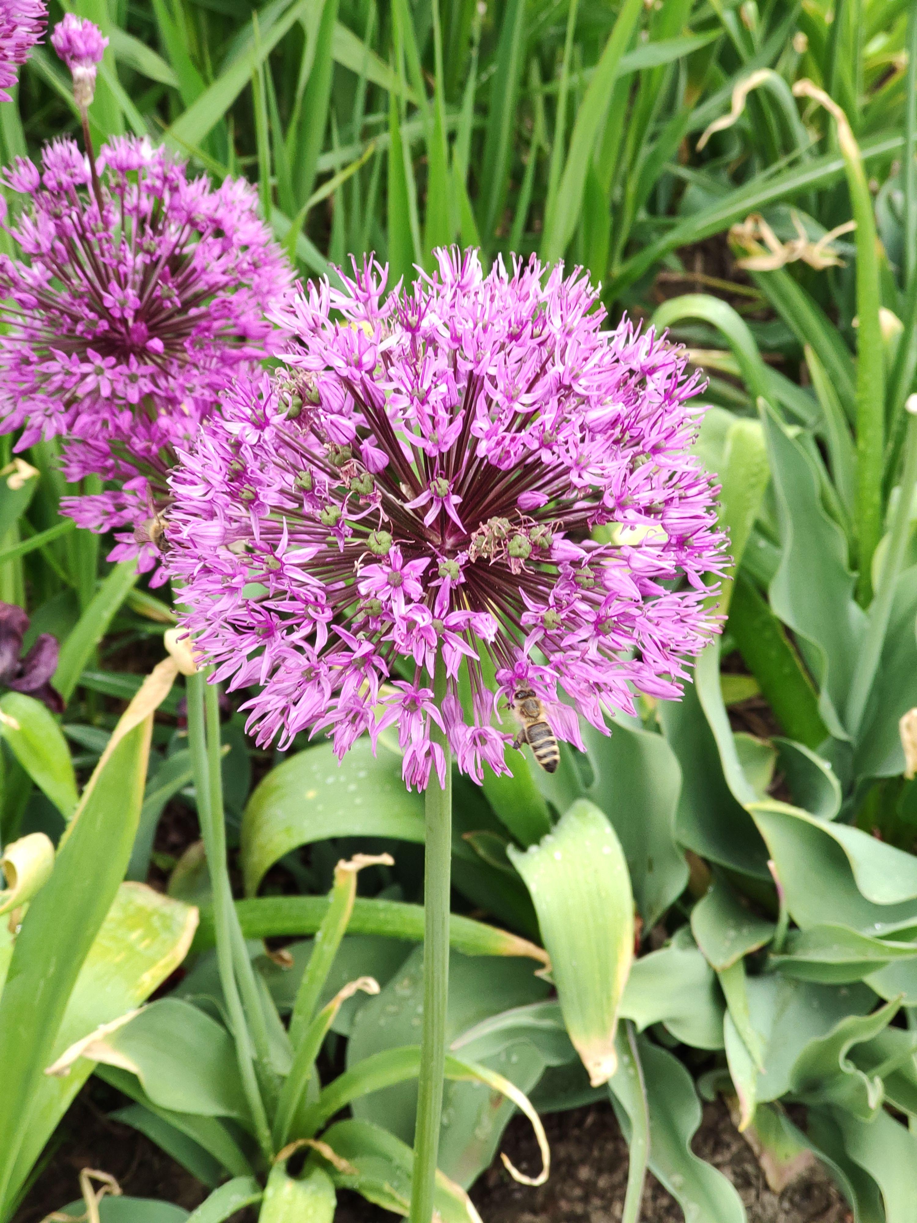 Pszczoly W Ogrodzie Plants Edible