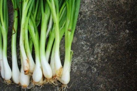 8 Easy Vegetables Herbs To Grow Indoors Growing Herbs 400 x 300
