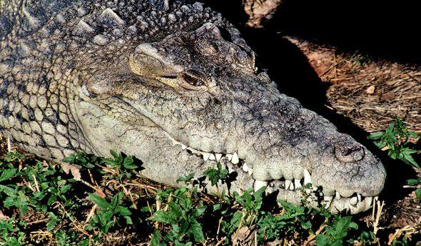 1653ffb0f9aa92b7f7518ec76449ed08 - How Long Does Reptile Gardens Take