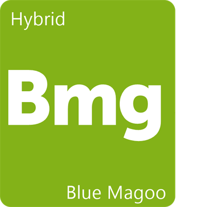 Blue Magoo Strain Information - Leafly