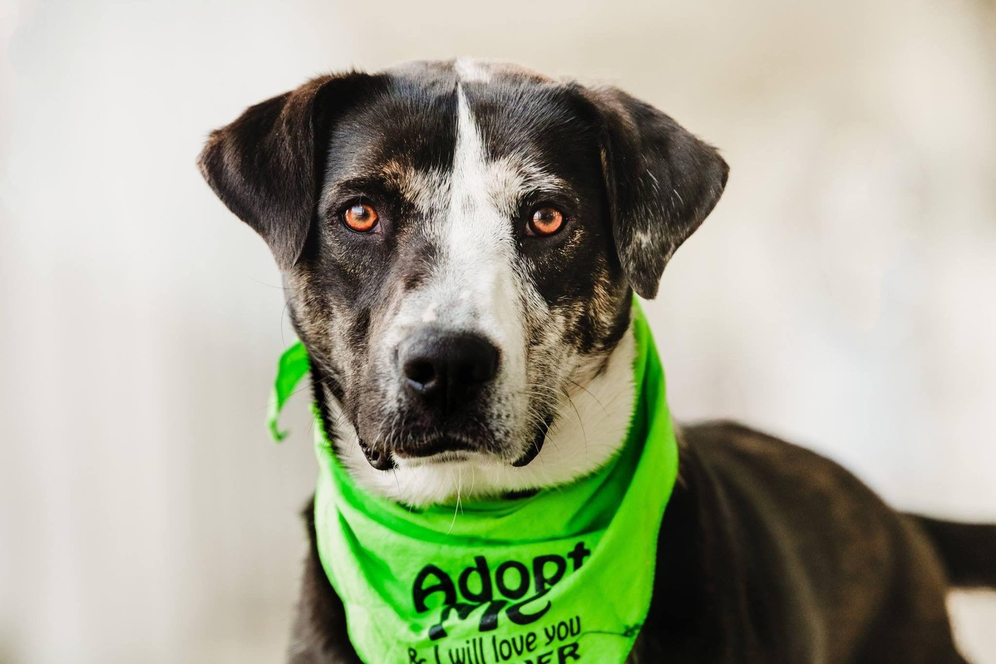 Adopt Eylua on Leopard dog, Dog search, Dogs