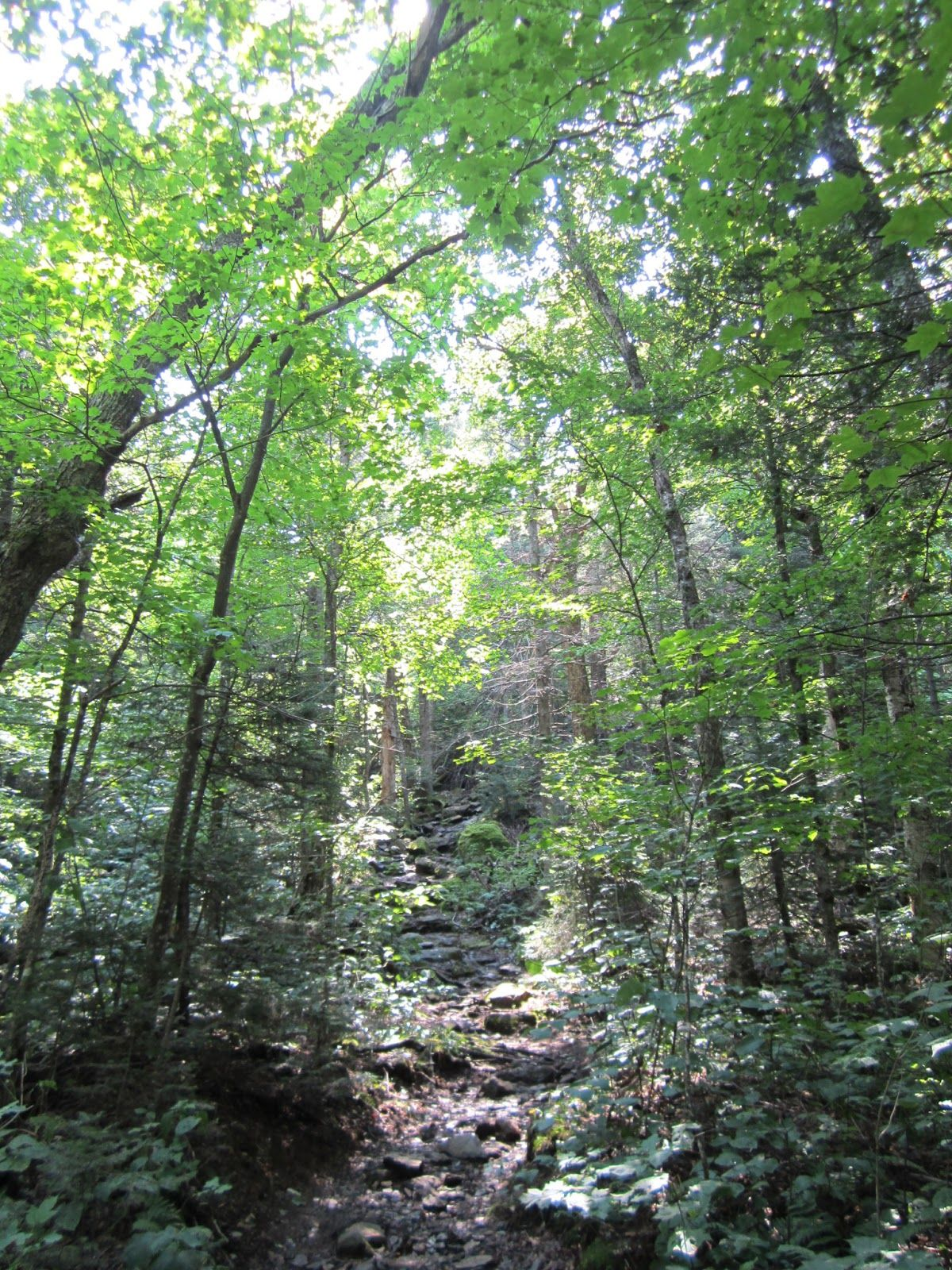 The Long Green Tunnel June 2013 Appalachian trail, Thru