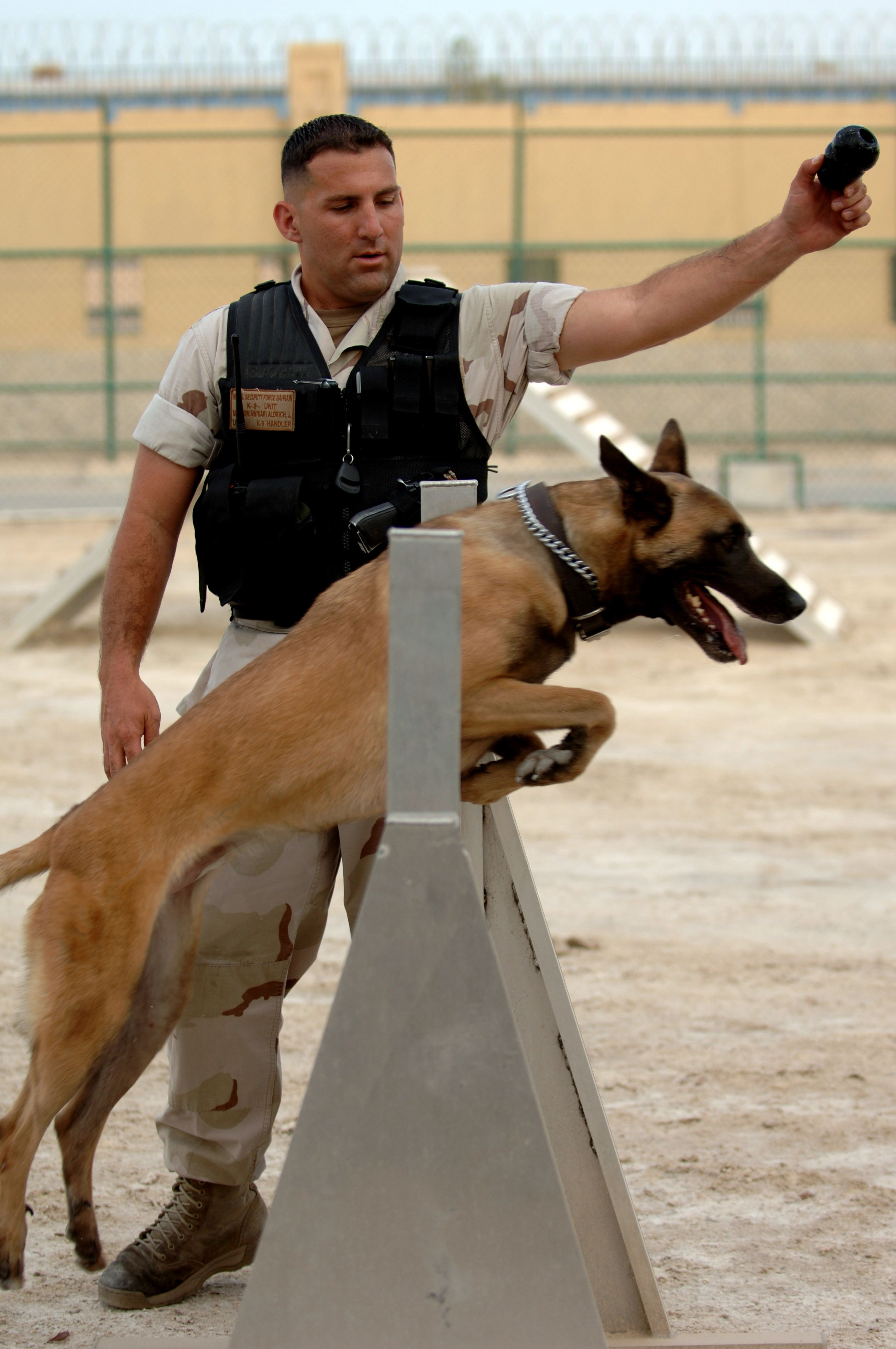 U S Naval Security Force K 9 Unit Training With Images