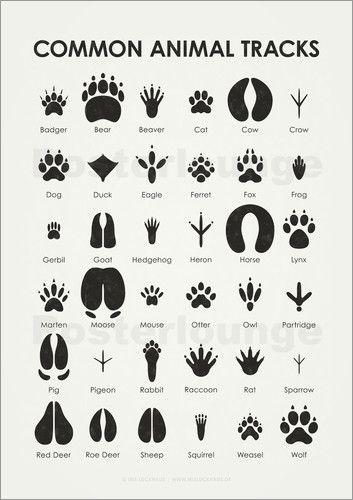 Poster Common Animal Tracks | Happy | Pinterest | Iris, Animal and ...