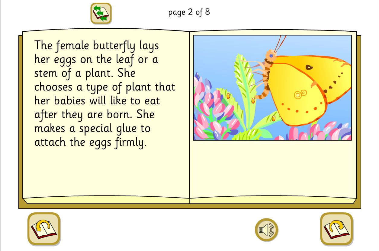 Butterfly Life Cycle Bright Colourful Illustrations And
