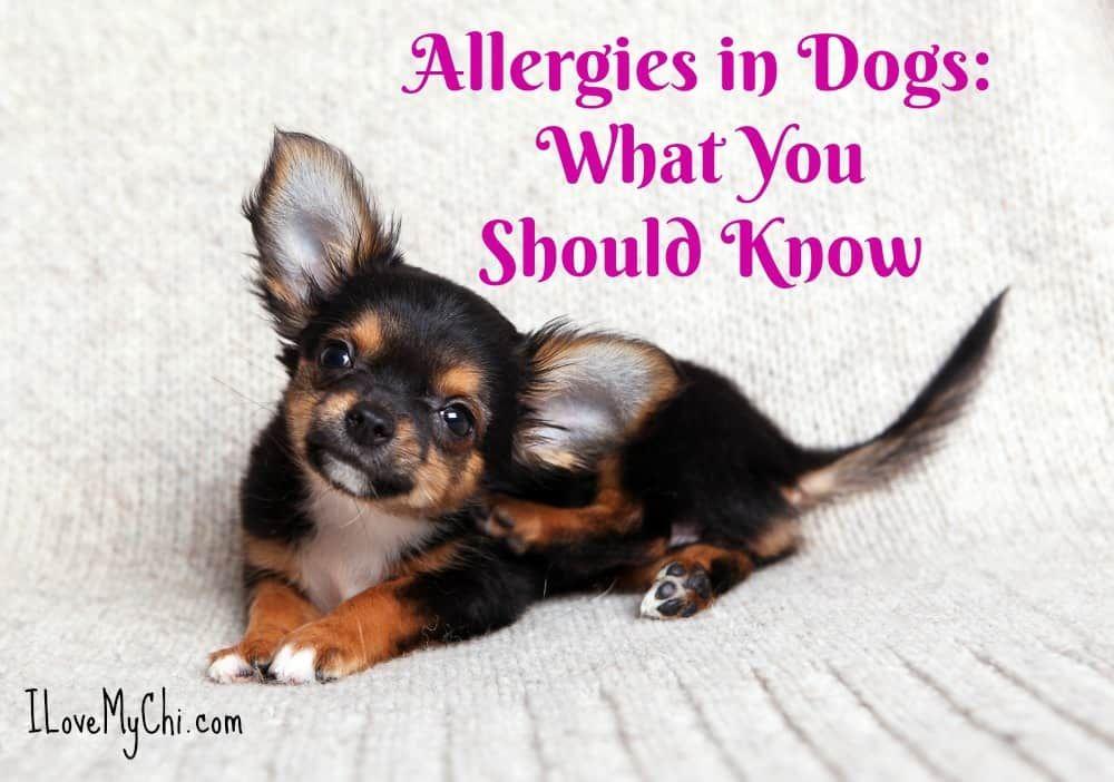 Pin on dog health