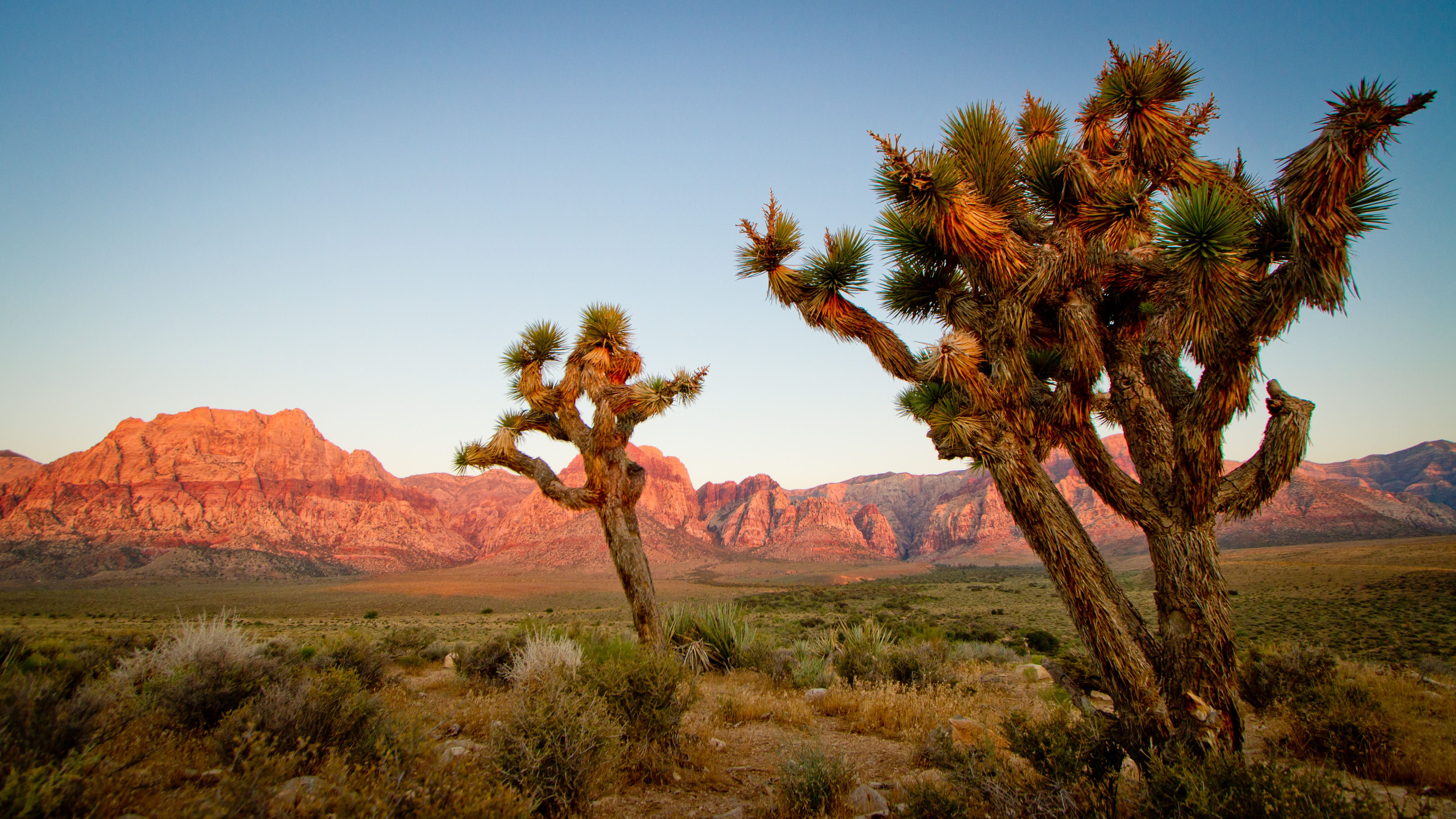 joshua tree national park muslim personals And any other person that god calls into ministry at joshua tree,  exploring joshua tree national park off  meet muslim women from fishtail free personals .