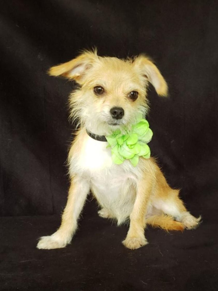 Looking For A Small Dog To Adopt Get Started With A Search On Adopt A Pet Com Now Dog Adoption Pet Adoption Cat Adoption
