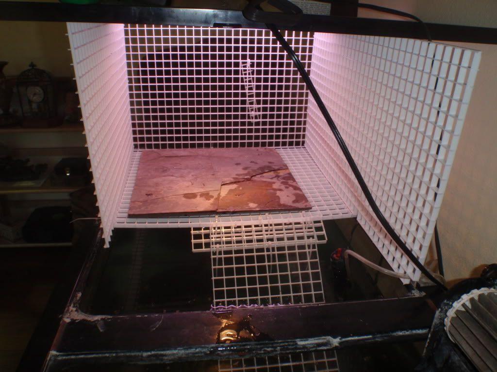 Diy Basking Platform Turtles Pinterest Turtle And