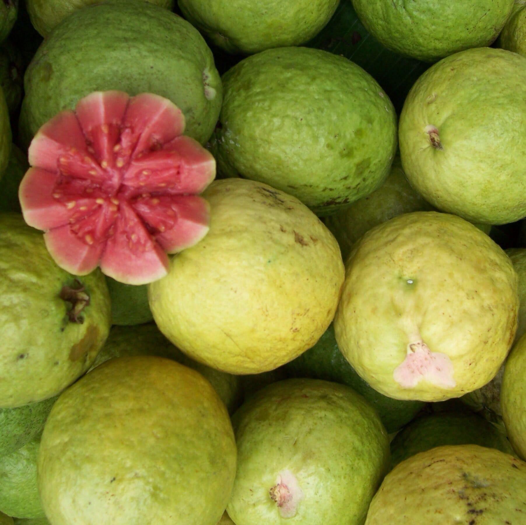 Guyana Fruits Guava Fruit Tree Trees