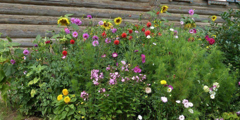 Jakie Rosliny Sadzic Jesli Mamy Malo Czasu Na Prace W Ogrodzie E Ogrodek Plants
