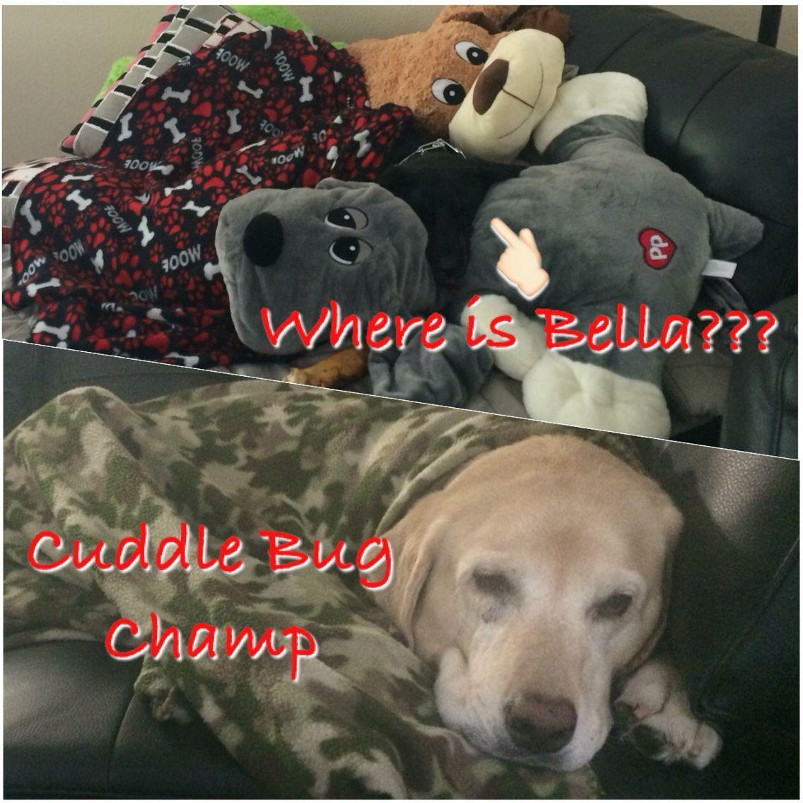 Can you find Bella?