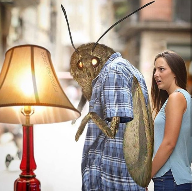 Please Enjoy These 32 Moth Memes That Made Me Cry From Laughing Memes Quality Memes Moth
