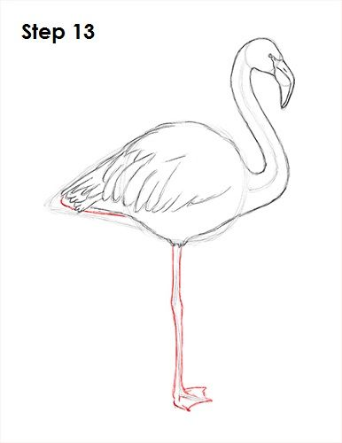 Flamingo Bird Drawing 13 Flamingo In 2019 Pinterest Flamingo