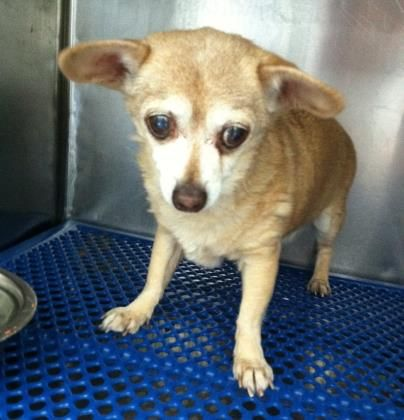 Update Current Status Is Unknown 34942946 Located In El Paso Tx