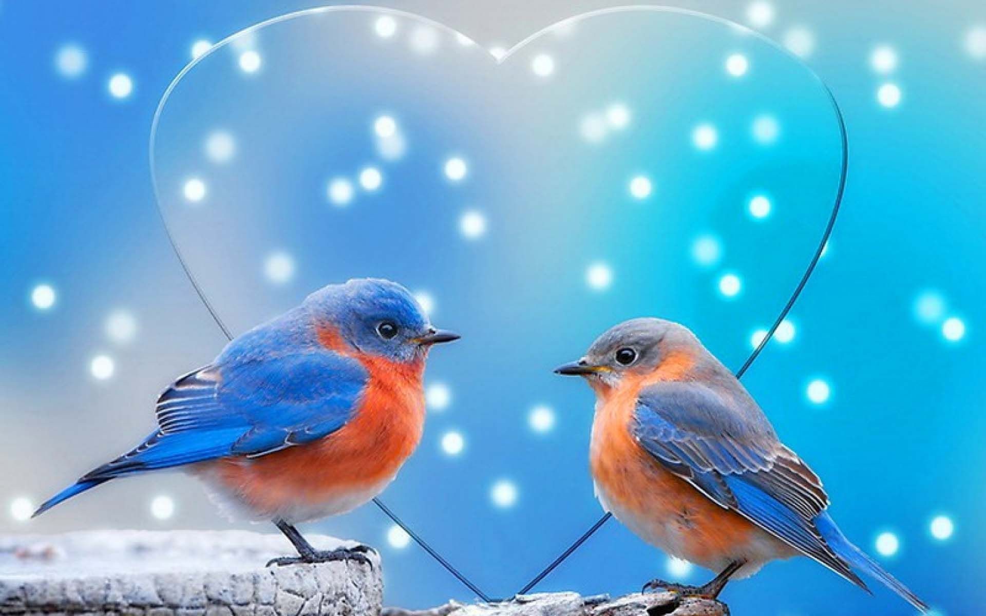 colorful love birds wallpaper hd animals and birds