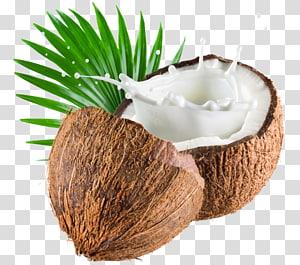 Coconut Water Coconut Milk Coconut Oil Milk Transparent Background Png Clipart Coconut Vector Coconut Fruit Splash