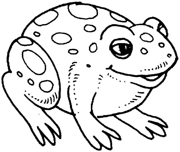 Big Bullfrog Coloring Pages Best Place To Color Coloring Pages Bullfrog Online Coloring